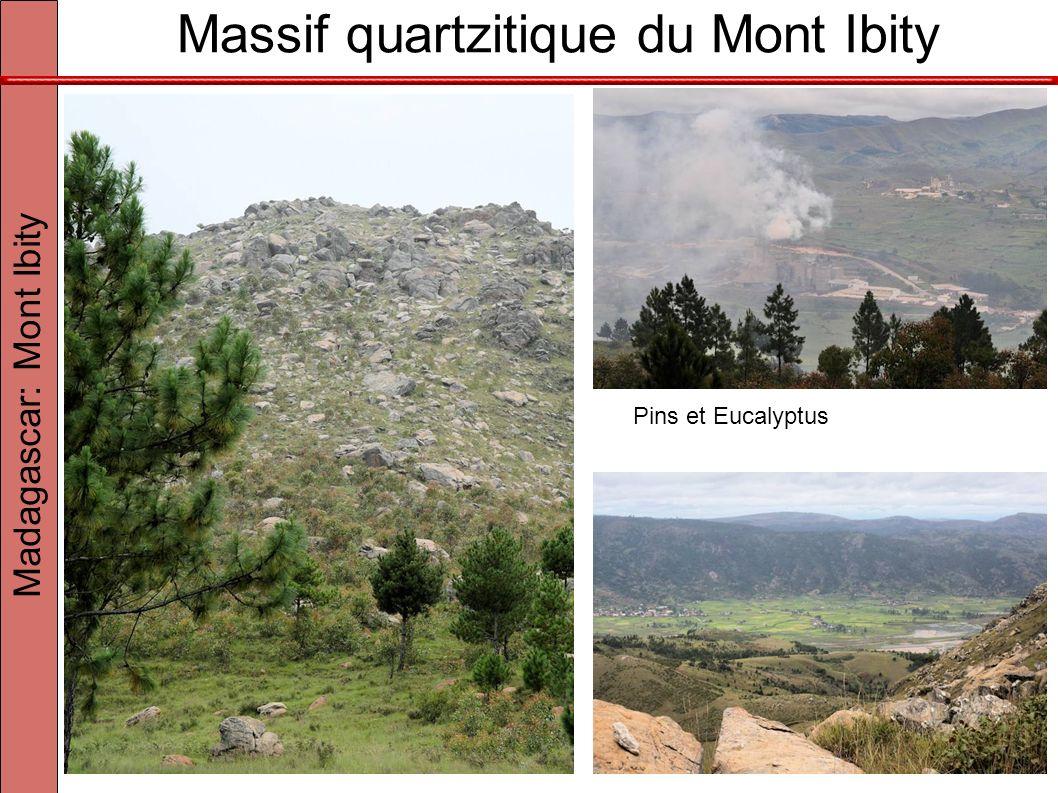 Massif quartzitique du Mont Ibity Madagascar: Mont Ibity Pins et Eucalyptus
