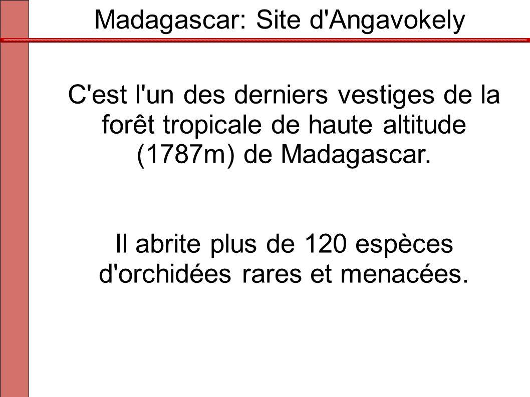 Madagascar: Site d'Angavokely C'est l'un des derniers vestiges de la forêt tropicale de haute altitude (1787m) de Madagascar. Il abrite plus de 120 es