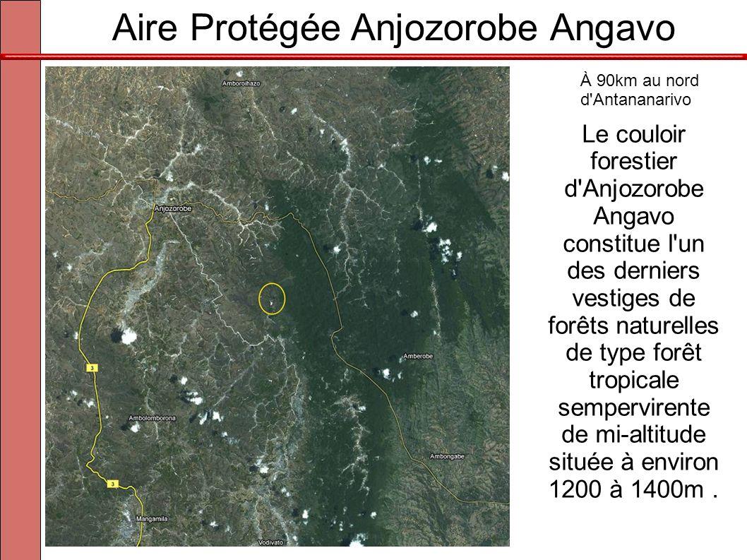 À 90km au nord d Antananarivo Le couloir forestier d Anjozorobe Angavo constitue l un des derniers vestiges de forêts naturelles de type forêt tropicale sempervirente de mi-altitude située à environ 1200 à 1400m.