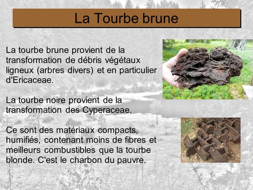 La Tourbe brune La tourbe brune provient de la transformation de débris végétaux ligneux (arbres divers) et en particulier d'Ericaceae. La tourbe noir