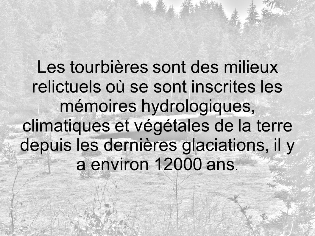 Les tourbières sont des milieux relictuels où se sont inscrites les mémoires hydrologiques, climatiques et végétales de la terre depuis les dernières