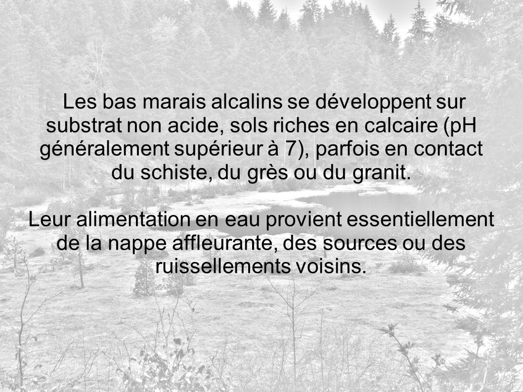 Les bas marais alcalins se développent sur substrat non acide, sols riches en calcaire (pH généralement supérieur à 7), parfois en contact du schiste,