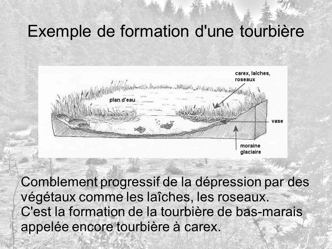 Exemple de formation d'une tourbière Comblement progressif de la dépression par des végétaux comme les laîches, les roseaux. C'est la formation de la