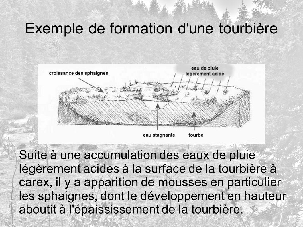 Exemple de formation d'une tourbière Suite à une accumulation des eaux de pluie légèrement acides à la surface de la tourbière à carex, il y a apparit
