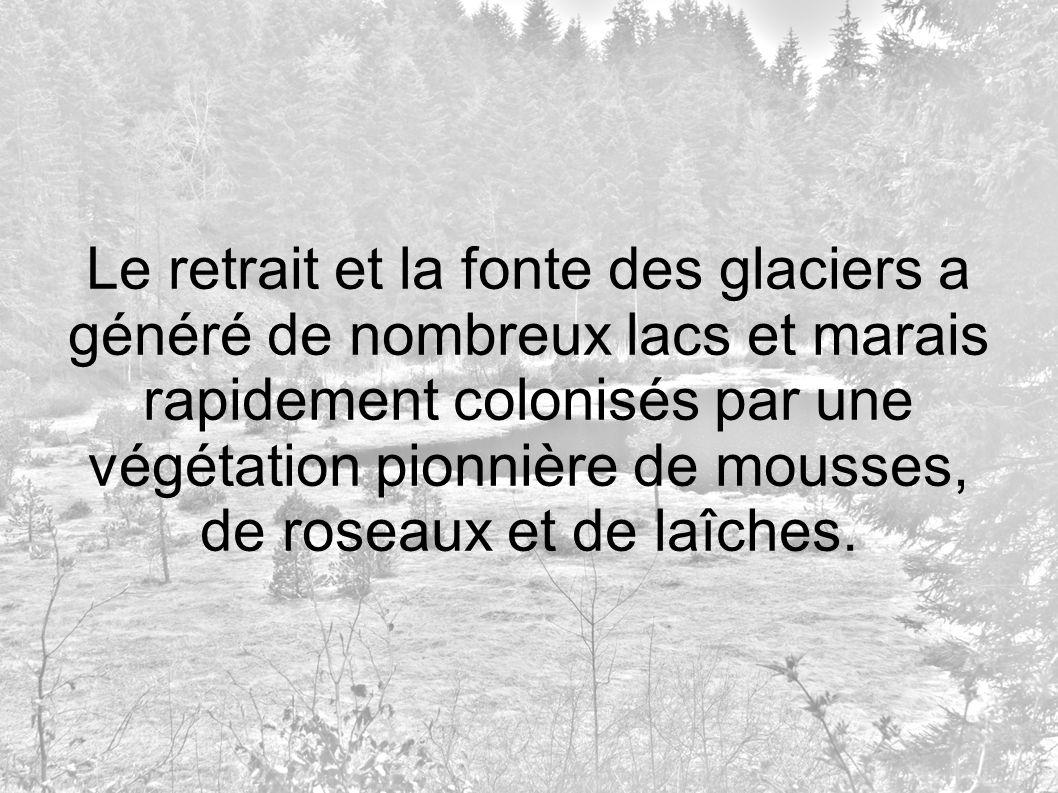 Le retrait et la fonte des glaciers a généré de nombreux lacs et marais rapidement colonisés par une végétation pionnière de mousses, de roseaux et de