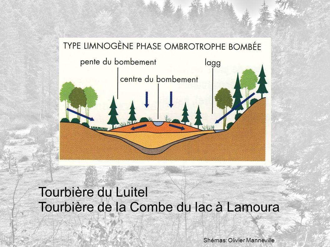 Tourbière du Luitel Tourbière de la Combe du lac à Lamoura Shémas: Olivier Manneville