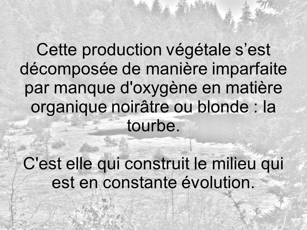 Cette production végétale sest décomposée de manière imparfaite par manque d'oxygène en matière organique noirâtre ou blonde : la tourbe. C'est elle q