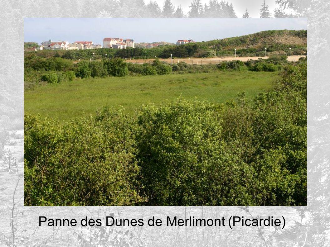 Panne des Dunes de Merlimont (Picardie)