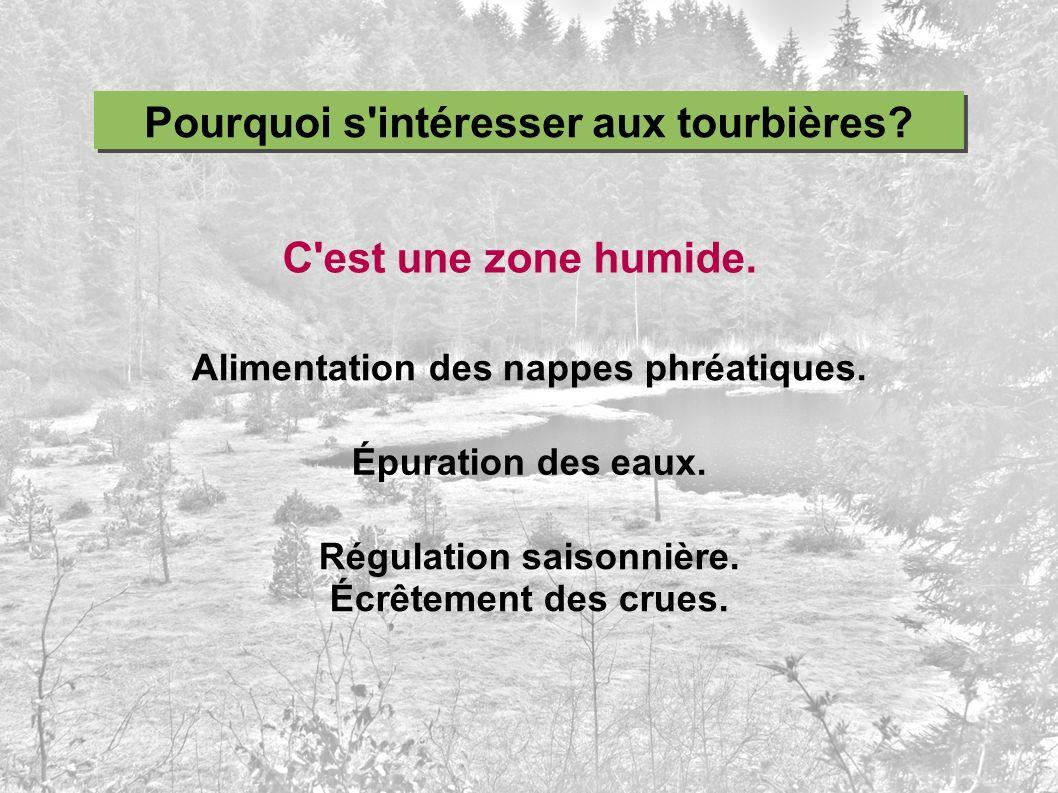 Pourquoi s'intéresser aux tourbières? C'est une zone humide. Alimentation des nappes phréatiques. Épuration des eaux. Régulation saisonnière. Écrêteme