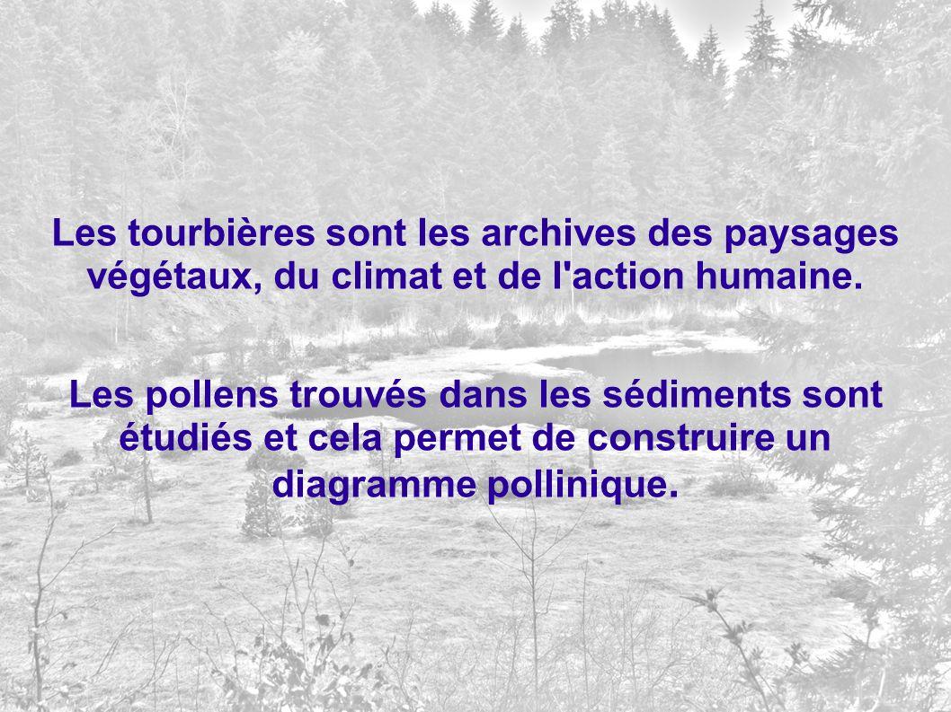 Les tourbières sont les archives des paysages végétaux, du climat et de l'action humaine. Les pollens trouvés dans les sédiments sont étudiés et cela
