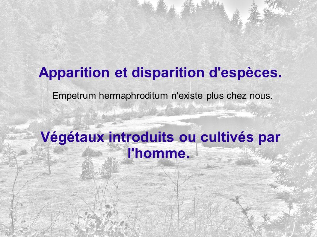 Apparition et disparition d'espèces. Empetrum hermaphroditum n'existe plus chez nous. Végétaux introduits ou cultivés par l'homme.