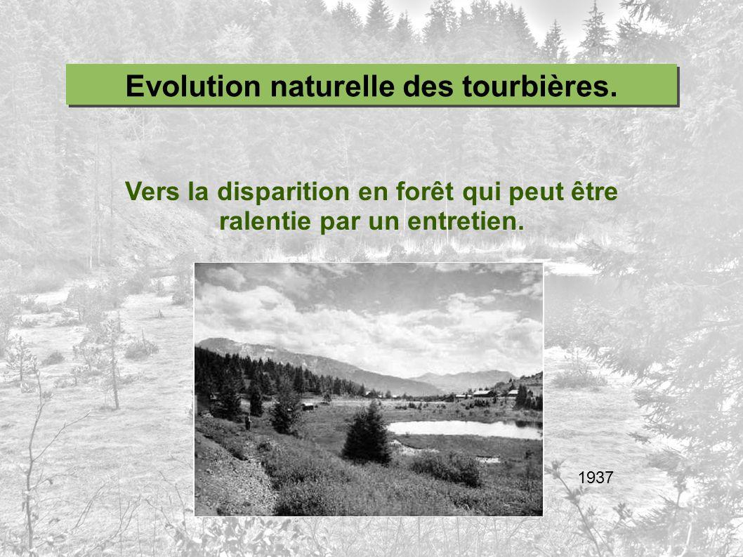 Vers la disparition en forêt qui peut être ralentie par un entretien. Evolution naturelle des tourbières. 1937