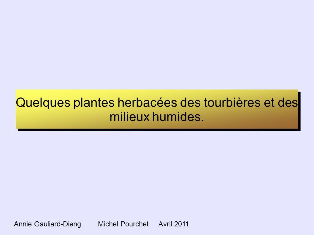 Quelques plantes herbacées des tourbières et des milieux humides. Annie Gauliard-Dieng Michel Pourchet Avril 2011
