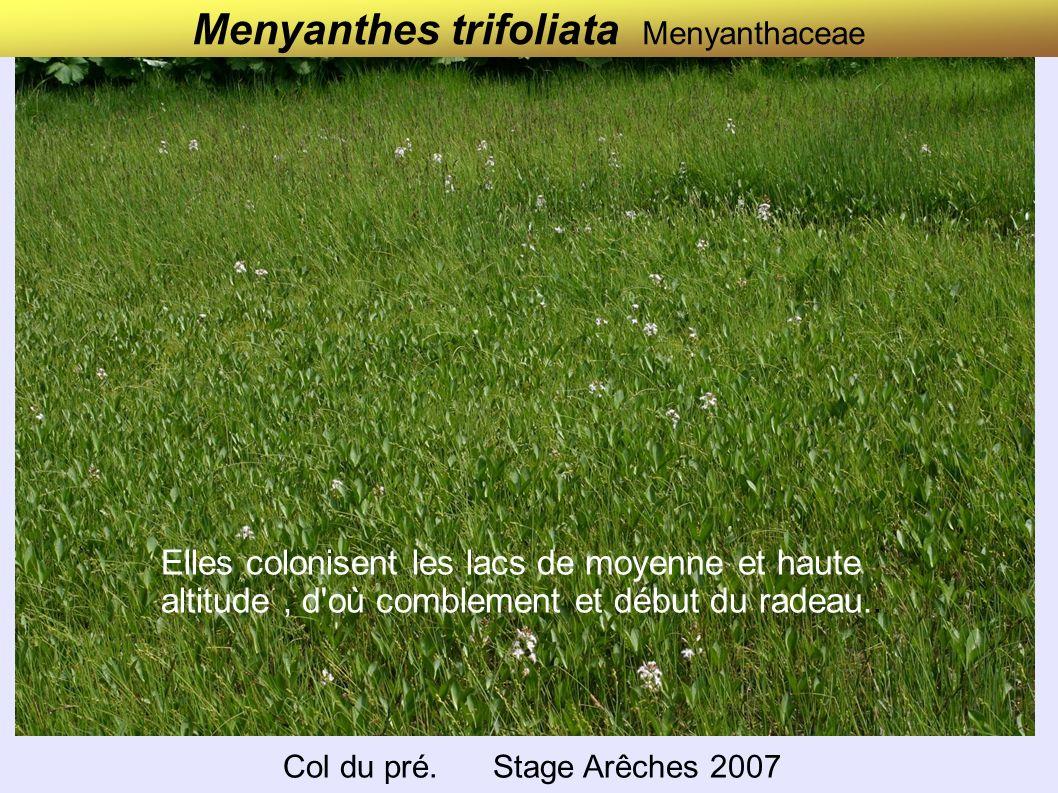 Menyanthes trifoliata Menyanthaceae Col du pré. Stage Arêches 2007 Elles colonisent les lacs de moyenne et haute altitude, d'où comblement et début du