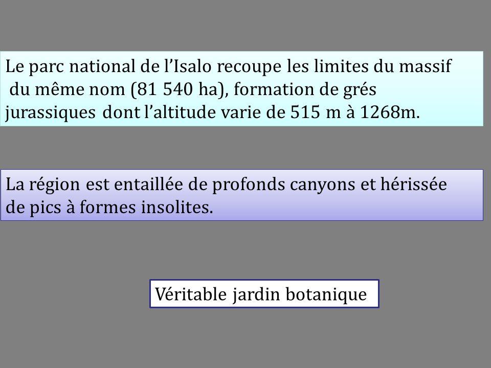Massif de lIsalo Commelina madagascarica Commelinaceae Tradescantia (non vue) 6E
