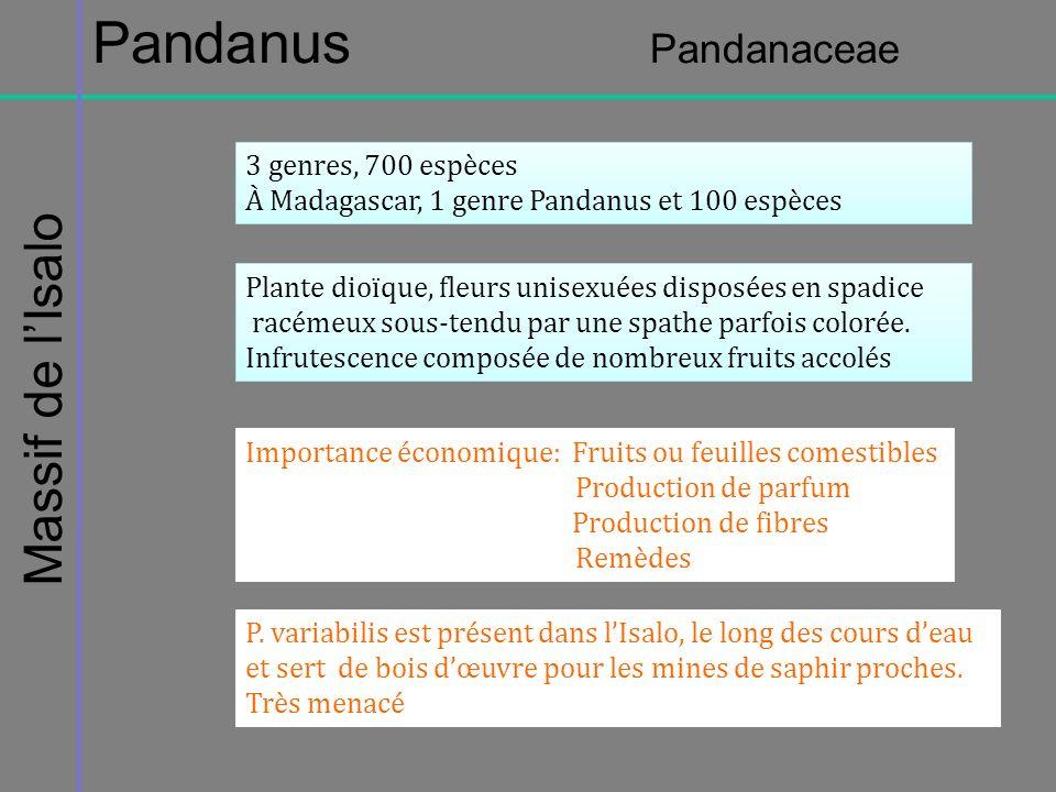 Massif de lIsalo Pandanus Pandanaceae 3 genres, 700 espèces À Madagascar, 1 genre Pandanus et 100 espèces 3 genres, 700 espèces À Madagascar, 1 genre