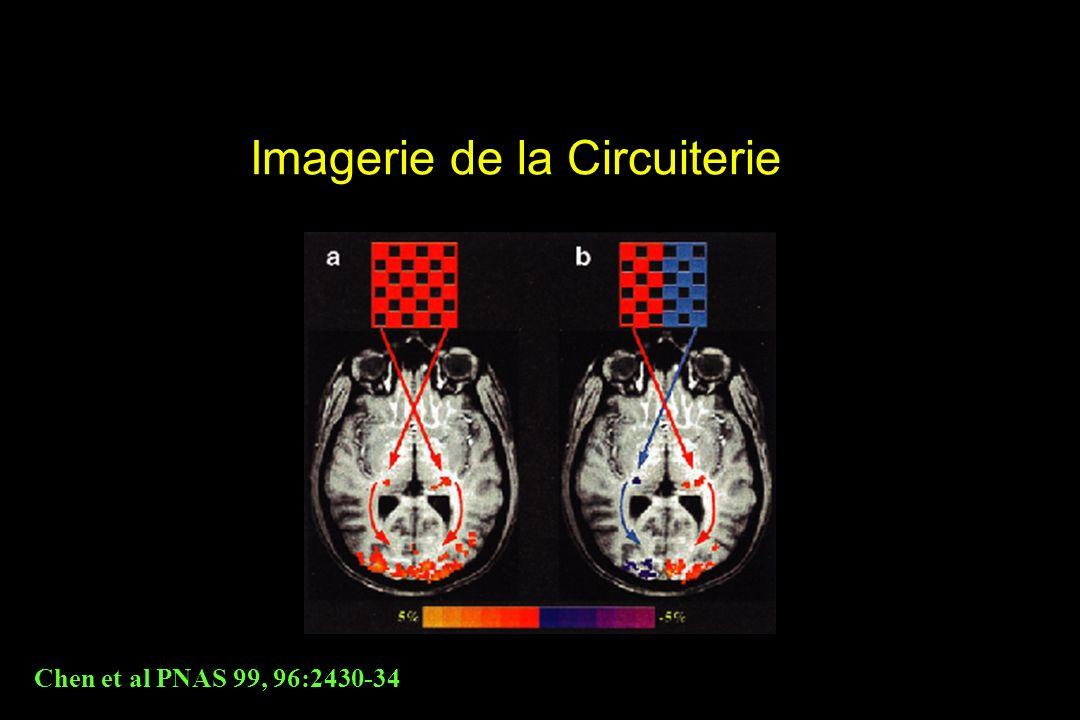 Imagerie de la Circuiterie Chen et al PNAS 99, 96:2430-34