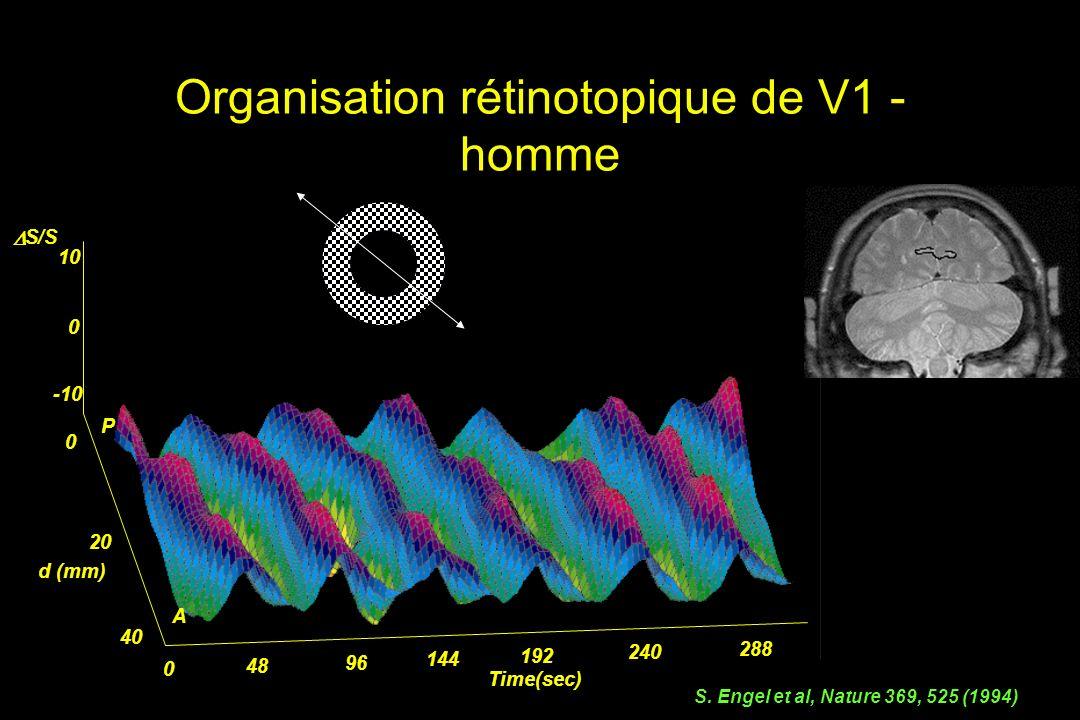 Organisation rétinotopique de V1 - homme 0 48 96 144 192 240 288 Time(sec) 0 20 40 d (mm) S/S 0 10 -10 P A + S.