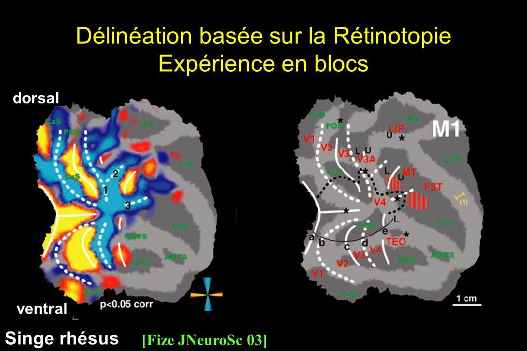 Délinéation basée sur la Rétinotopie Expérience en blocs Singe rhésus [Fize JNeuroSc 03] dorsal ventral