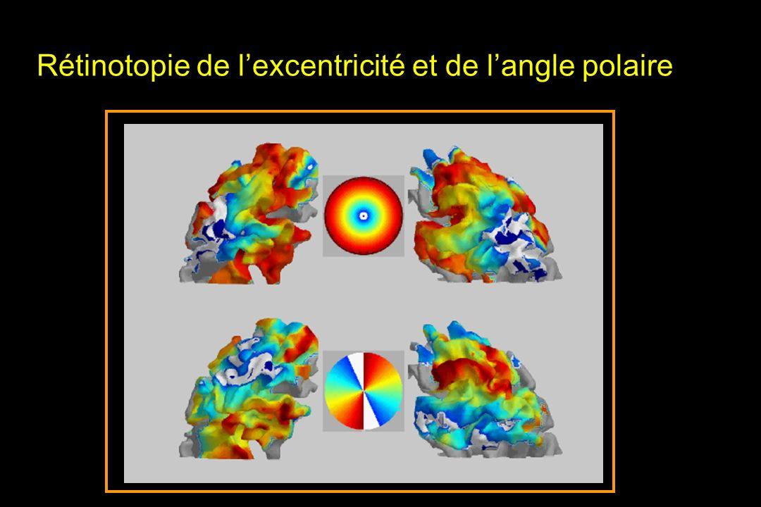 Rétinotopie de lexcentricité et de langle polaire