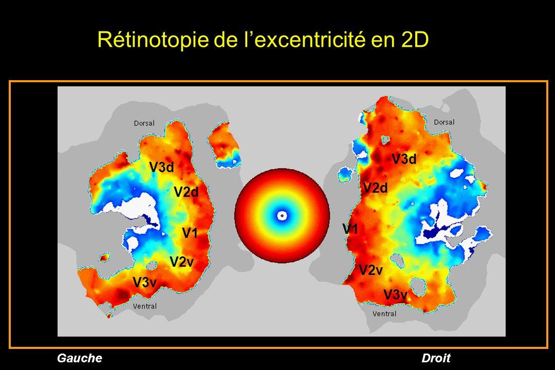 GaucheDroit Rétinotopie de lexcentricité en 2D V1 V2d V3d V3v V2v V1 V2d V3d V3v V2v