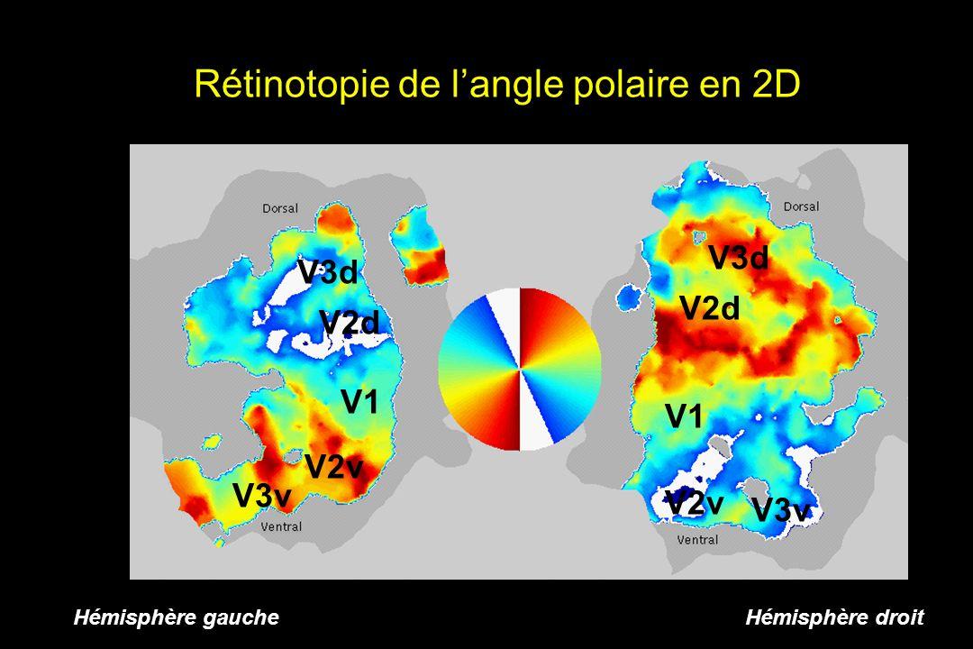 Hémisphère gauche Hémisphère droit Rétinotopie de langle polaire en 2D V1 V2v V2d V3d V3v V1 V2v V2d V3d V3v