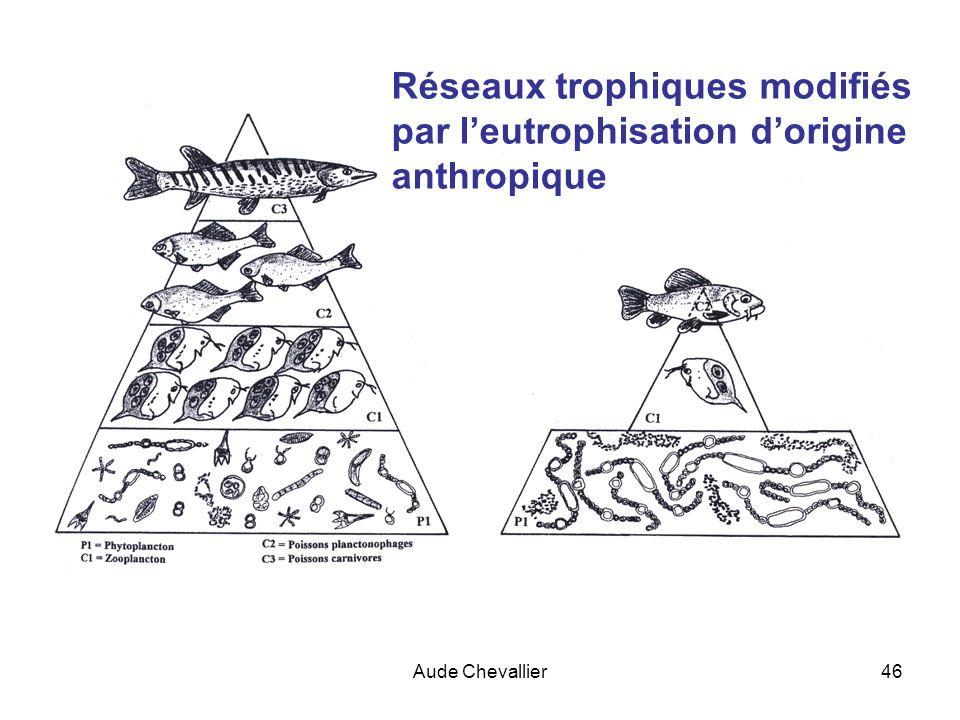 Aude Chevallier46 Réseaux trophiques modifiés par leutrophisation dorigine anthropique