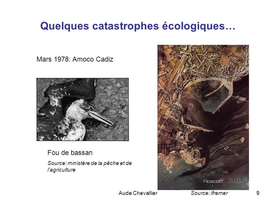 Aude Chevallier9 Quelques catastrophes écologiques… Mars 1978: Amoco Cadiz Fou de bassan Source: ministère de la pêche et de lagriculture Source: ifre