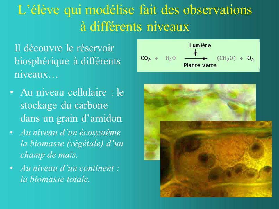 Lélève qui modélise fait des observations à différents niveaux Au niveau cellulaire : le stockage du carbone dans un grain damidon Au niveau dun écosystème la biomasse (végétale) dun champ de maïs.