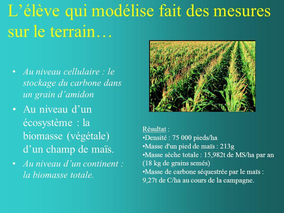 Lélève qui modélise fait des mesures sur le terrain… Au niveau cellulaire : le stockage du carbone dans un grain damidon Au niveau dun écosystème : la biomasse (végétale) dun champ de maïs.