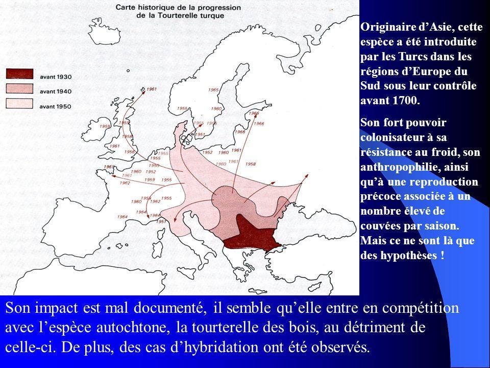 Originaire dAsie, cette espèce a été introduite par les Turcs dans les régions dEurope du Sud sous leur contrôle avant 1700. Son fort pouvoir colonisa