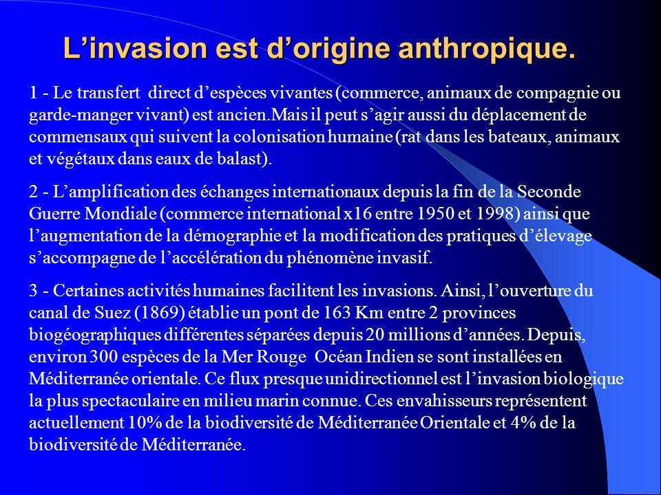 Linvasion est dorigine anthropique. 1 - Le transfert direct despèces vivantes (commerce, animaux de compagnie ou garde-manger vivant) est ancien.Mais