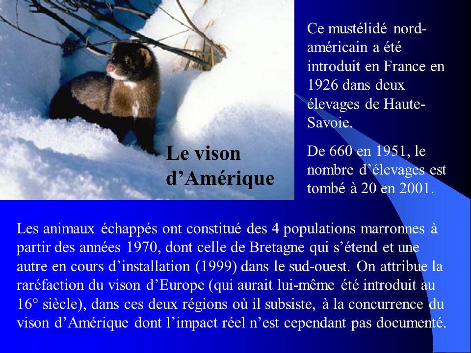 Le vison dAmérique Ce mustélidé nord- américain a été introduit en France en 1926 dans deux élevages de Haute- Savoie. De 660 en 1951, le nombre délev