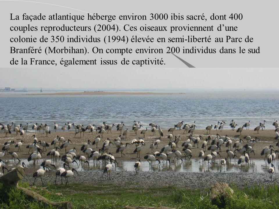 La façade atlantique héberge environ 3000 ibis sacré, dont 400 couples reproducteurs (2004). Ces oiseaux proviennent dune colonie de 350 individus (19