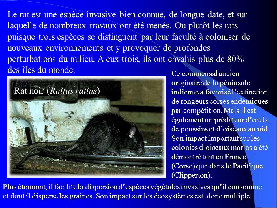 Le rat est une espèce invasive bien connue, de longue date, et sur laquelle de nombreux travaux ont été menés. Ou plutôt les rats puisque trois espèce
