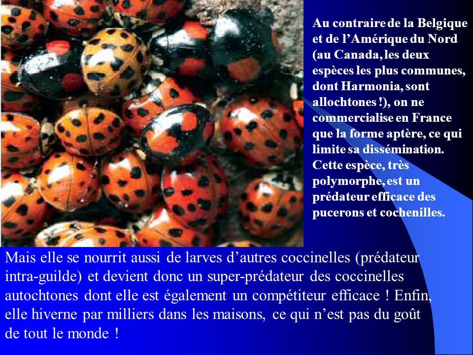 Au contraire de la Belgique et de lAmérique du Nord (au Canada, les deux espèces les plus communes, dont Harmonia, sont allochtones !), on ne commerci