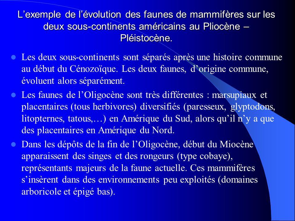 Lexemple de lévolution des faunes de mammifères sur les deux sous-continents américains au Pliocène – Pléistocène. Les deux sous-continents sont sépar