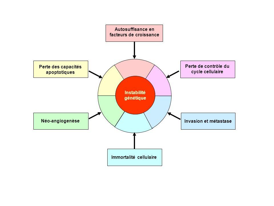 Néo-angiogenèse Invasion et métastase Immortalité cellulaire Instabilité génétique Perte de contrôle du cycle cellulaire Perte des capacités apoptotiq