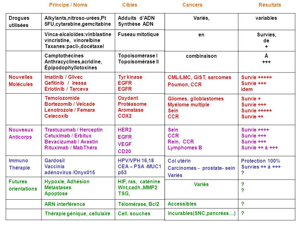 Drogues utilisées Alkylants,nitroso-urées,Pt 5FU,cytarabine,gemcitabine Adduits dADN Synthèse ADN Vinca-alcaloïdes:vinblastine vincristine, vinorelbin