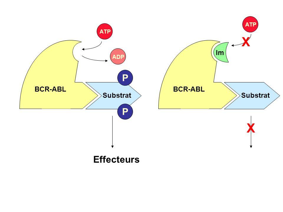 BCR-ABL ATP X Im Substrat X Effecteurs BCR-ABL ATP ADP P Substrat P