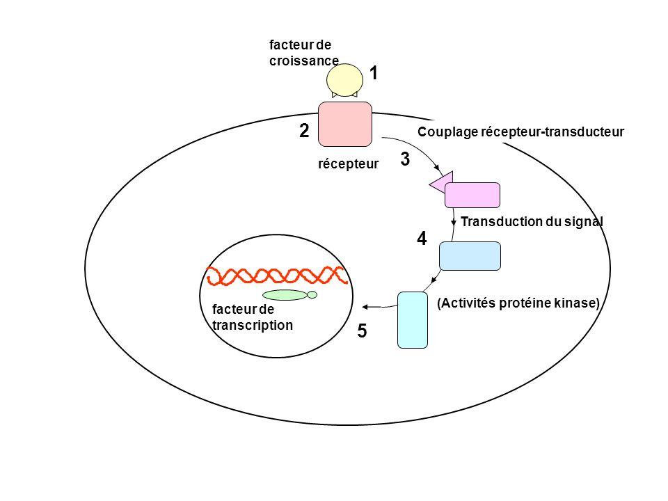 Transduction du signal (Activités protéine kinase) 1 2 facteur de croissance récepteur Couplage récepteur-transducteur 3 4 facteur de transcription 5