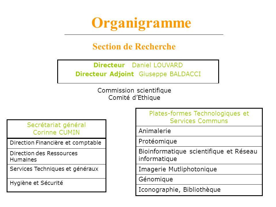 Organigramme Hygiène et Sécurité Services Techniques et généraux Direction des Ressources Humaines Direction Financière et comptable Secrétariat génér
