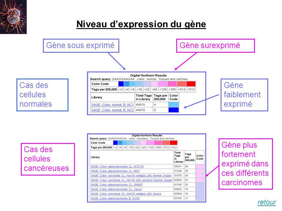 Niveau dexpression du gène Cas des cellules normales Cas des cellules cancéreuses Gène sous expriméGène surexprimé Gène plus fortement exprimé dans ce