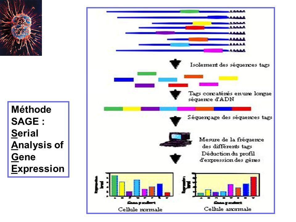Méthode SAGE : Serial Analysis of Gene Expression