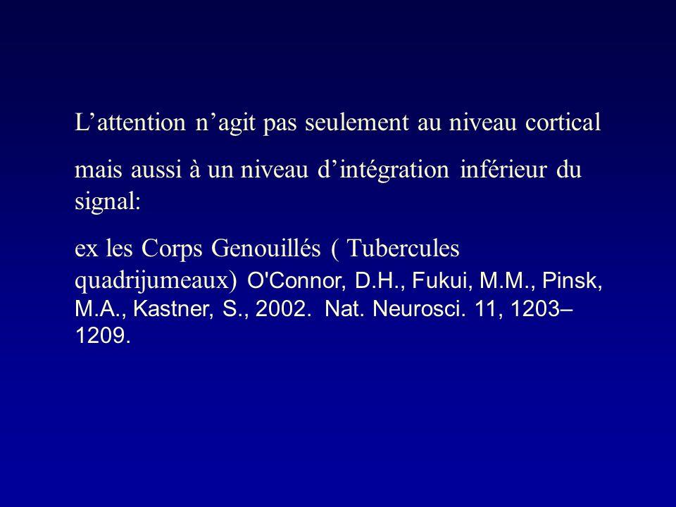 Lattention nagit pas seulement au niveau cortical mais aussi à un niveau dintégration inférieur du signal: ex les Corps Genouillés ( Tubercules quadrijumeaux) O Connor, D.H., Fukui, M.M., Pinsk, M.A., Kastner, S., 2002.