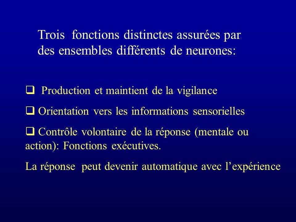 Production et maintient de la vigilance Orientation vers les informations sensorielles Contrôle volontaire de la réponse (mentale ou action): Fonctions exécutives.