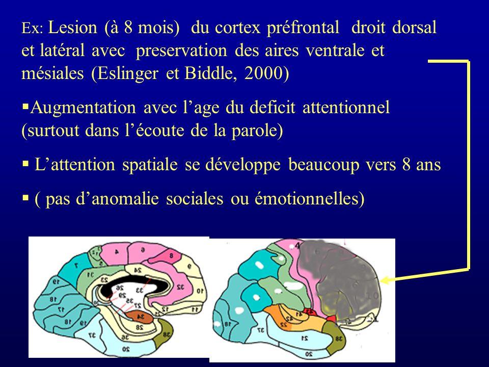 Ex: Lesion (à 8 mois) du cortex préfrontal droit dorsal et latéral avec preservation des aires ventrale et mésiales (Eslinger et Biddle, 2000) Augmentation avec lage du deficit attentionnel (surtout dans lécoute de la parole) Lattention spatiale se développe beaucoup vers 8 ans ( pas danomalie sociales ou émotionnelles)