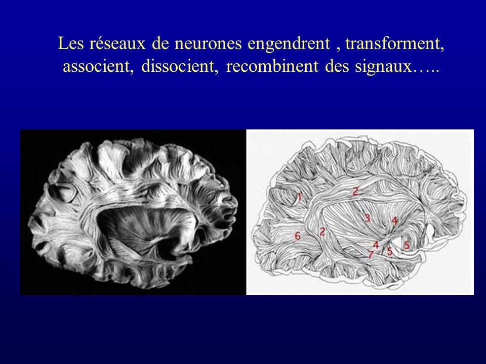Les réseaux de neurones engendrent, transforment, associent, dissocient, recombinent des signaux…..