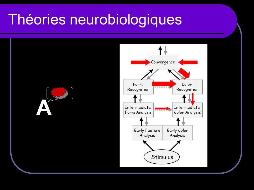 Théories neurobiologiques AA A