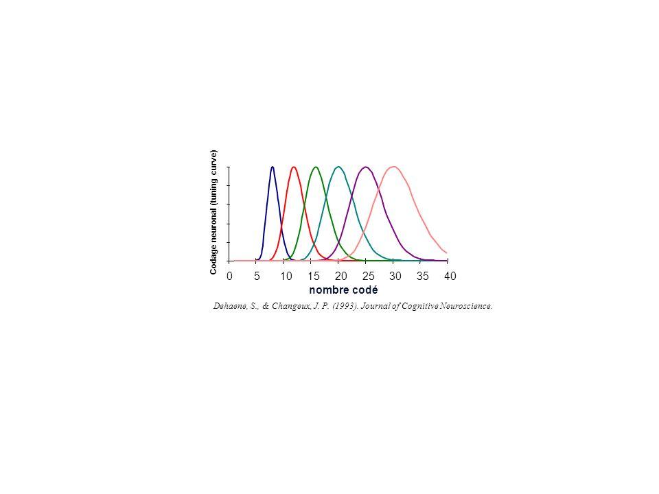 nombre codé Dehaene, S., & Changeux, J. P. (1993). Journal of Cognitive Neuroscience. Codage neuronal (tuning curve)